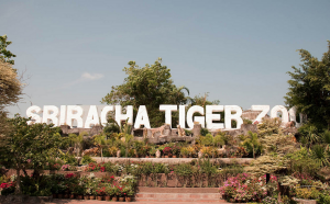 Sri Racha Tiger Zoo