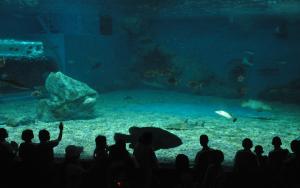 Buarpha University Aquarium